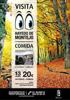 Visita al Hayedo de Montejo 2013